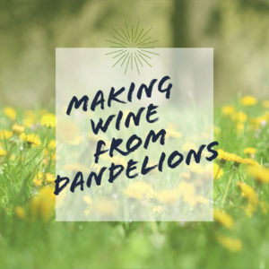 Dandelion-wine-recipe