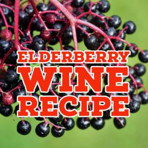 elderberry-wine-recipe