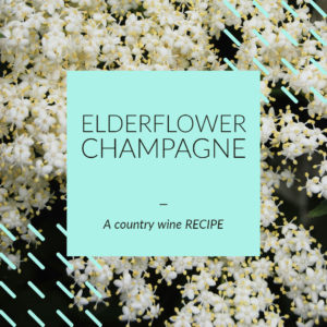 elderflower-champagne-recipe