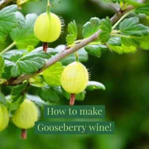 gooseberry-wine-recipe