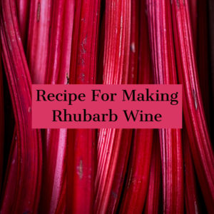 rhubarb-wine-recipe
