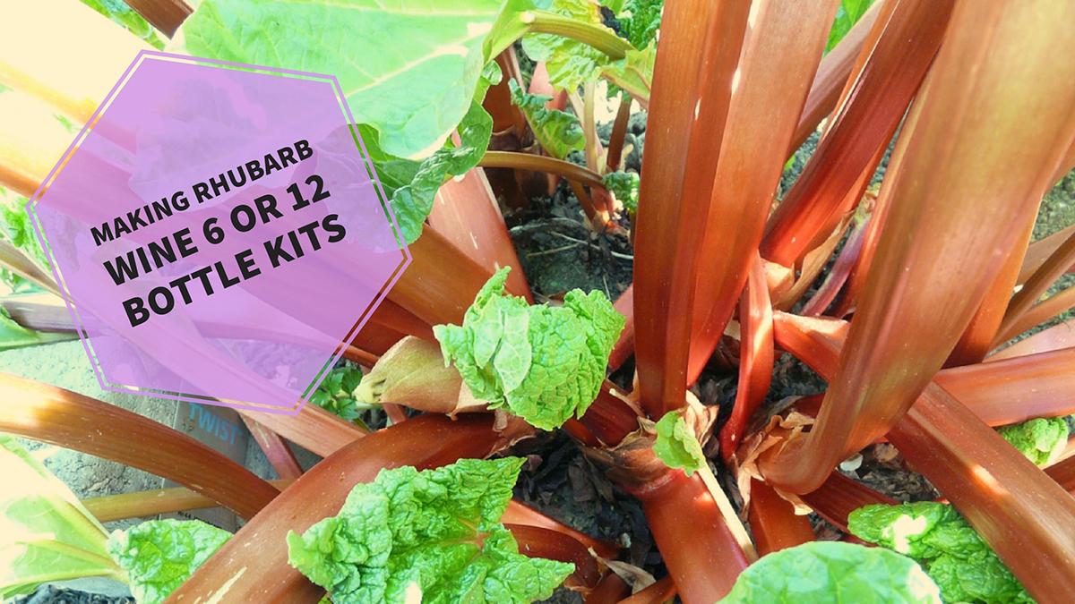 rhubarb-wine-recipe